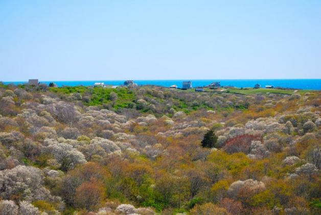 Rodman's Hollow, conservation, Block Island Conservancy, nature